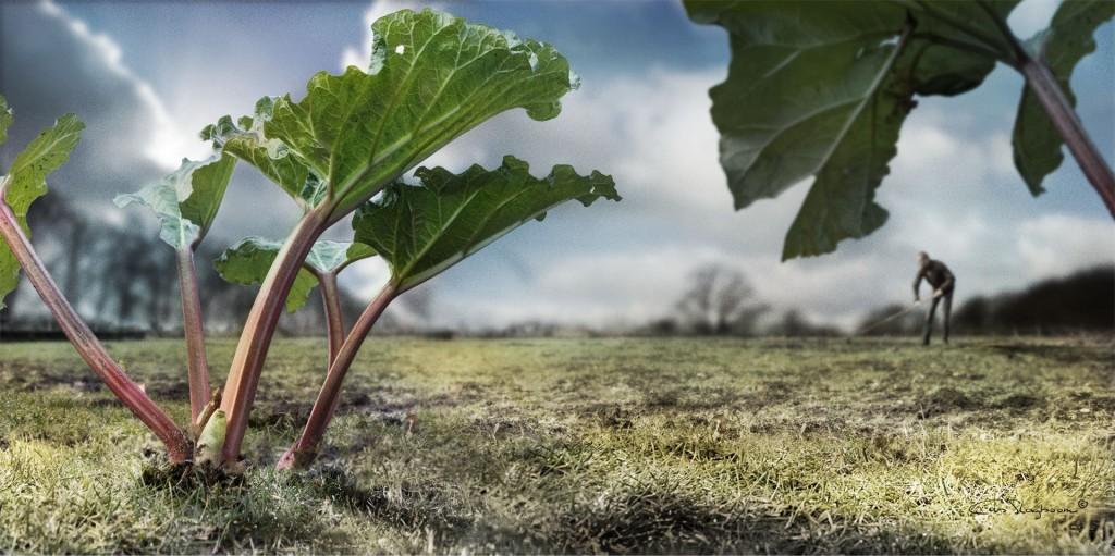 Farmer - Fine Art Fotografie